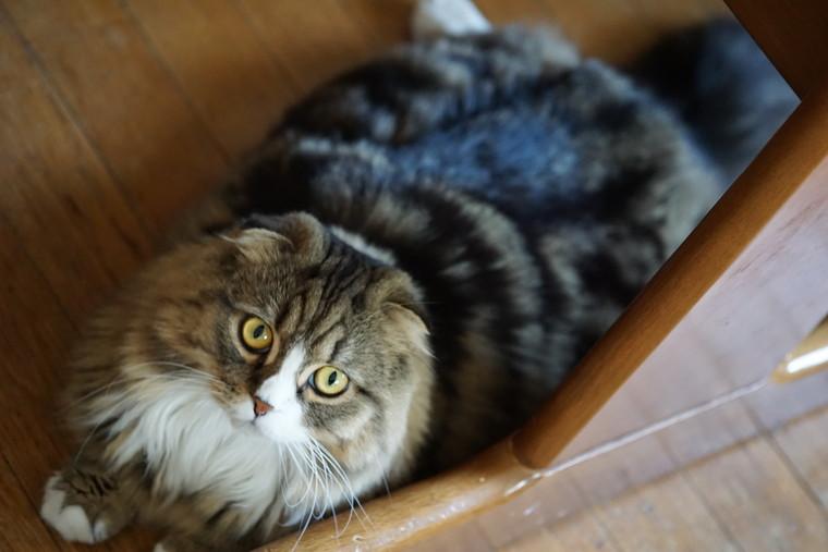 テーブルの下でぺたーん