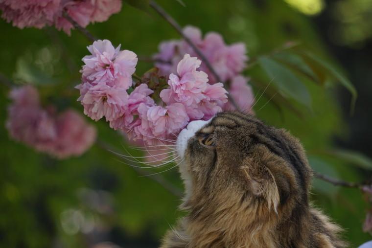 お花をくんくん