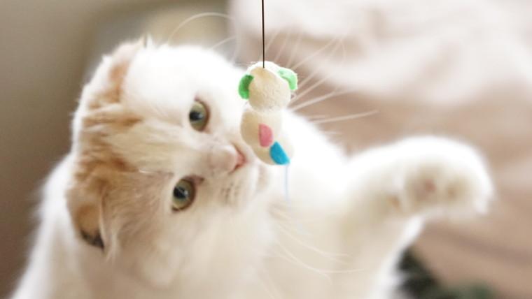 恐る恐るおもちゃに手を伸ばして