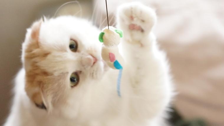 おもちゃに手を伸ばして