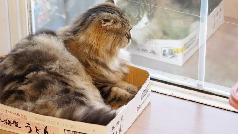 箱に入って見るましろ