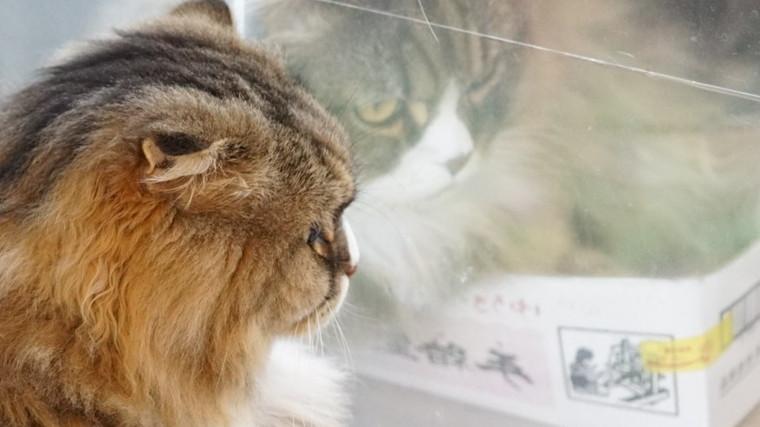 ガラスに写るましろの険しい表情