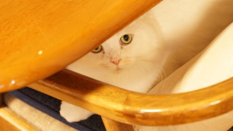 テーブルの下のもっち